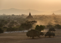 Local cattle herders head home at sunset in Bagan.